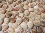 Shell Mosaic - Original Shell Mosaic